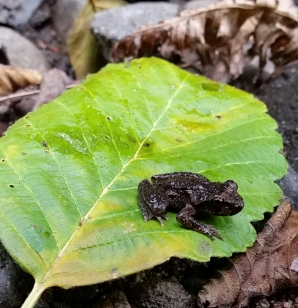 astr-vjackson-frog-chuckanut-creek