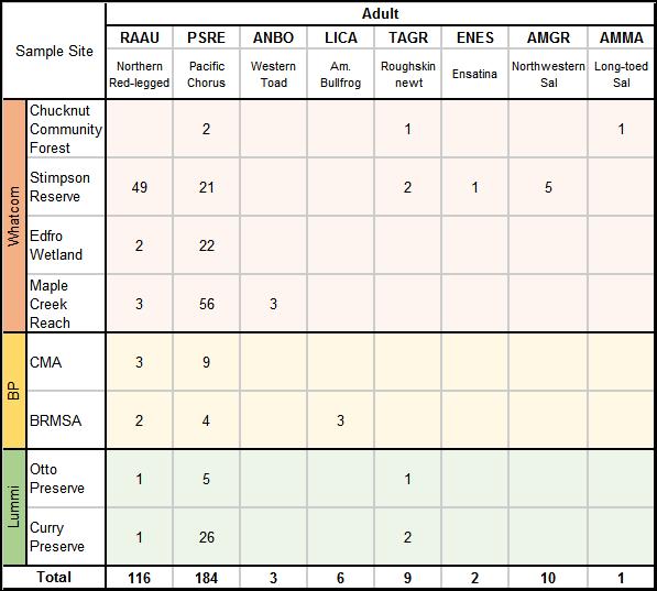2015adult